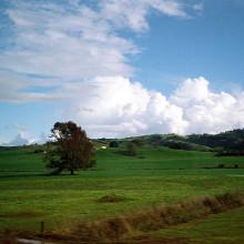 2008년 5월 뉴질랜드 / 롤라이 AFM35